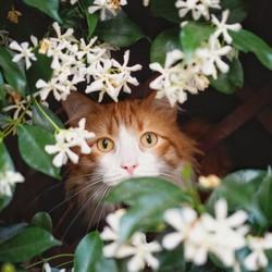 Cette fleur aux propriétés cutanées est idéale pour les peaux sèches, sensibles, irritées ou agressées. Son parfum très agréable et persistant contribue à un moment de bien-être et d'apaisement lors de la toilette ou même pour se parfumer. Enchanteur, le jasmin régule l'humeur, diminue l'anxiété et facilite l'endormissement 💤Une fleur qui a tout pour vous séduire (oui oui, même les chats l'adorent ! 😻)🇬🇧 This flower with skin-friendly properties is ideal for dry, sensitive, irritated or stressed skin. Its very pleasant and persistent fragrance contributes to a moment of well-being and soothing when washing or even when perfuming oneself. Enchanting, jasmine regulates the mood, reduces anxiety and helps you fall asleep 💤A flower that has everything to seduce you (yes, even cats love it! 😻)#tade #tadepaysdulevant #alepposoap #soap #savon #savondalep #savondalepveritable #paindalep #cosmosnaturalcertified #skincare #savondemarseille #marseillesoap #realmarseillesoap #traditiondemarseille #pneurecyclé #decoration #recycled #ecofriendly